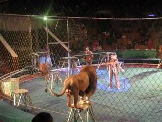 Ужасное проишествие в цирке